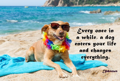 Quote of the Day - A Man's Best Friend