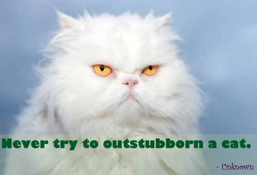 Quote of the Day - Stubborn Kitty