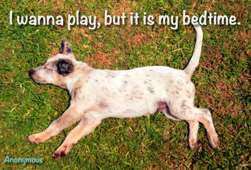 Quote of the Day - The Puppy's Bedtime